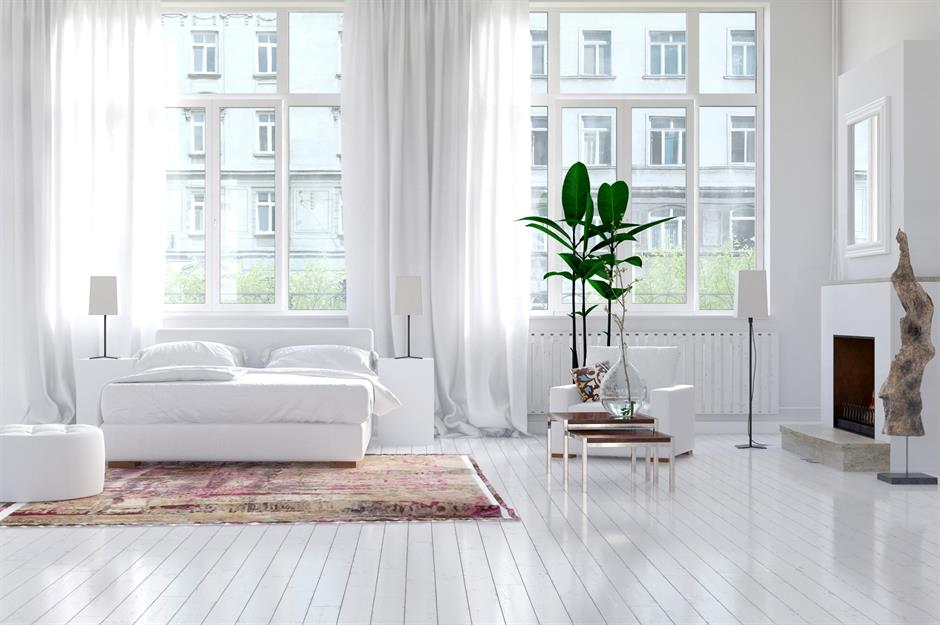 12 hardy houseplants and where to put them | loveproperty com