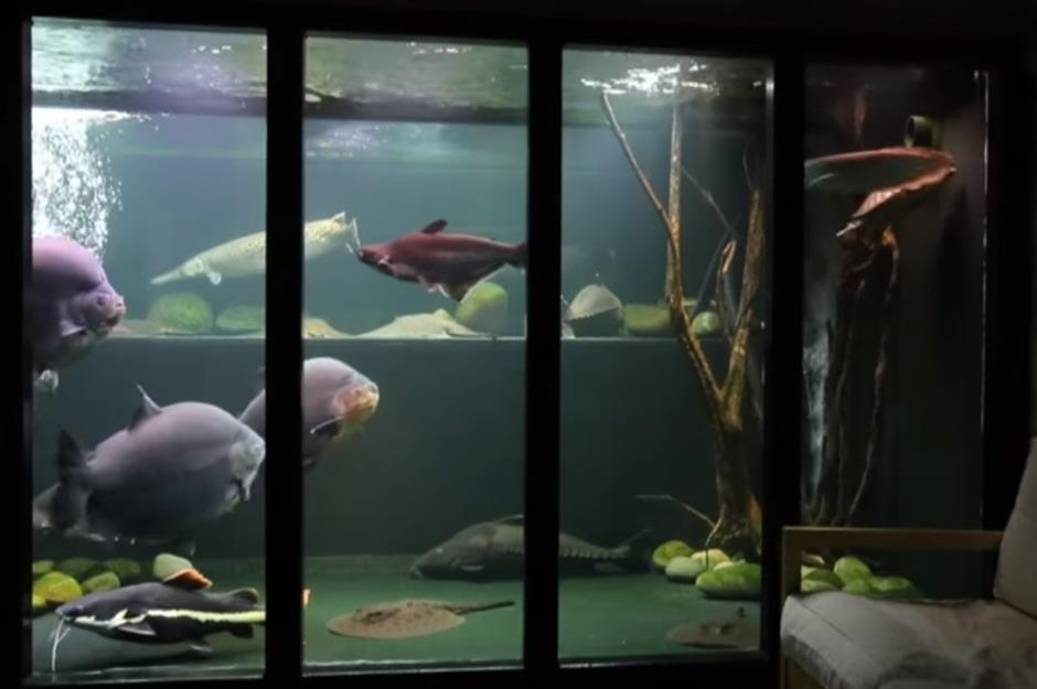 Amazing aquariums only millionaires can afford