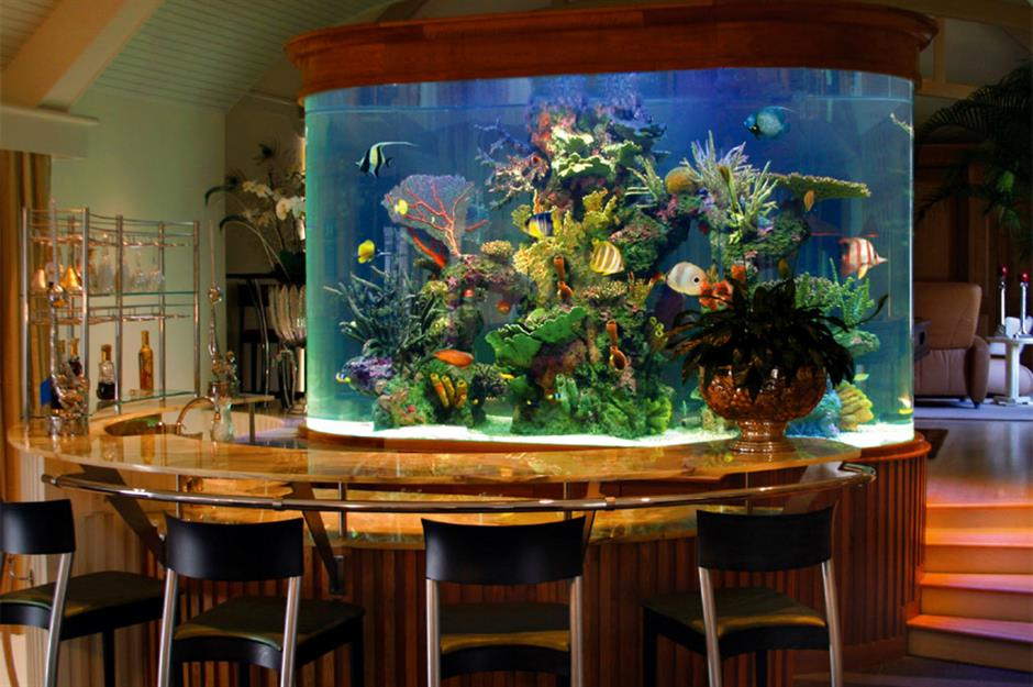 Amazing aquariums only millionaires can afford ... on home cooking designs, home park designs, home gardening designs, home decor designs, home glass designs, home beach designs, home plans designs, home construction designs, home water feature designs, home lake designs, home library designs, home entertainment designs, home school designs, florida home designs, home archery range designs, home art designs, home salt designs, home dog kennel designs, home castle designs, home cafe designs,