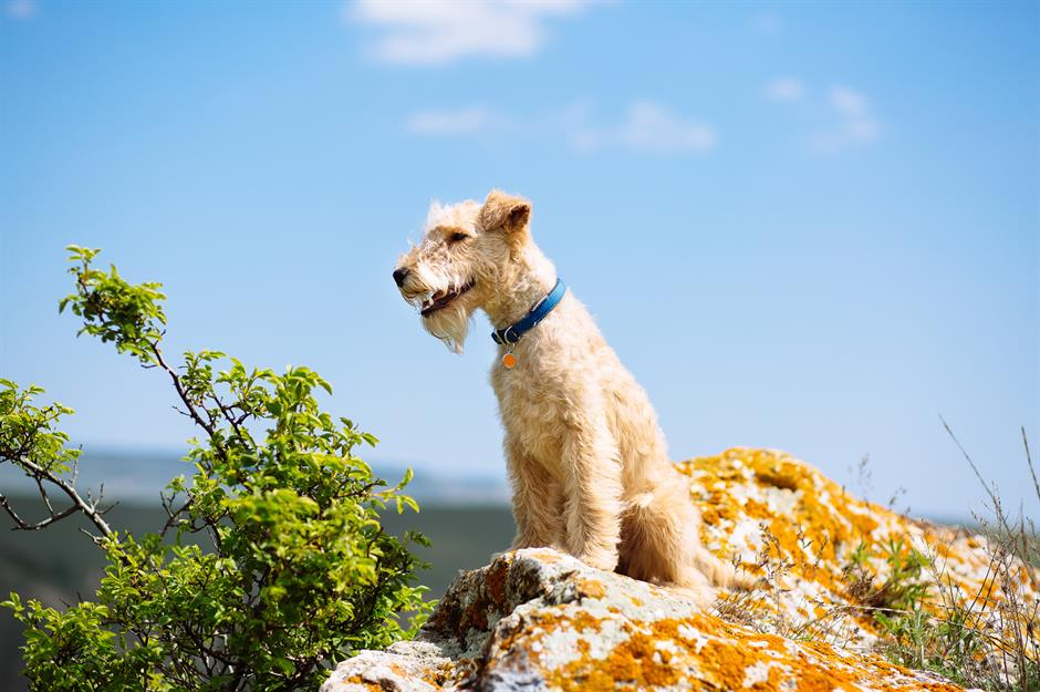 The most expensive dog breeds in the world | lovemoney com