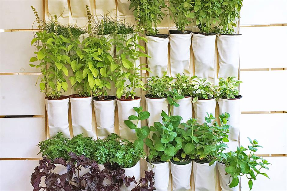Easy gardening hacks to take the graft out of growing ...