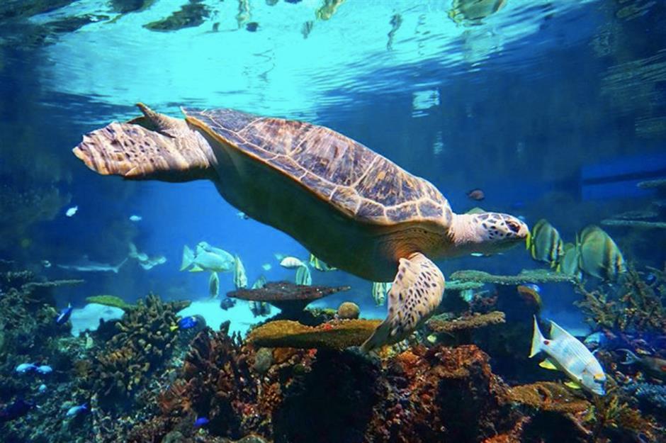 Go wild at America's best zoos and aquariums   loveexploring com