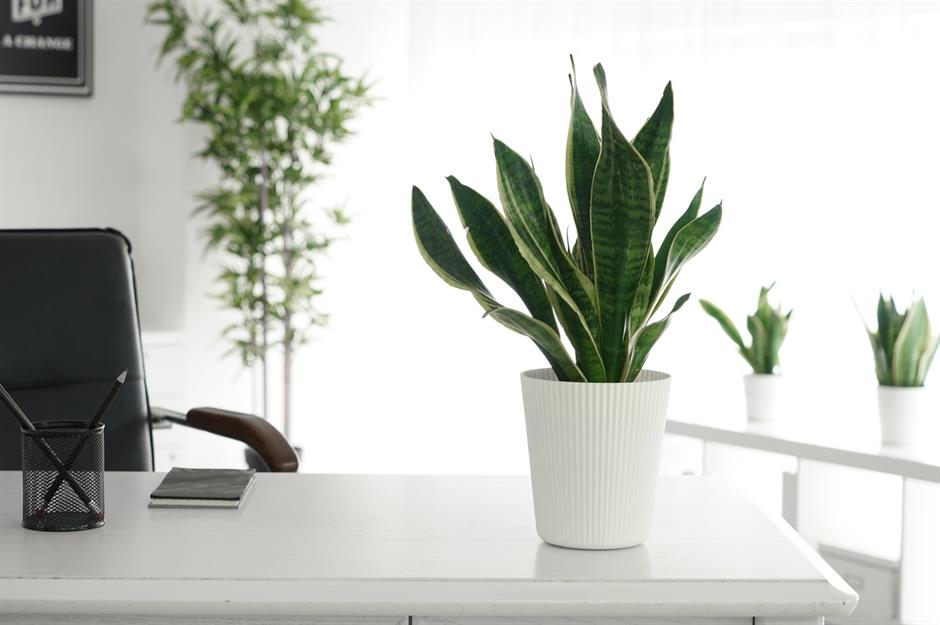 Hardy Houseplants And Where Put Them Loveproperty