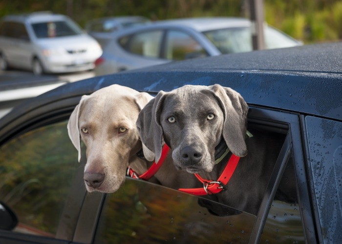 Update the address on your dog's microchip (Image: Shutterstock)